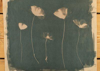 Cyanotype printing workshop - Poppies