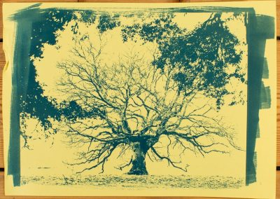 Cyanotype printing workshop - Tree on Yellow