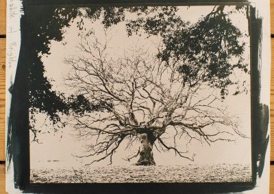 Cyanotype printing workshop - Tree