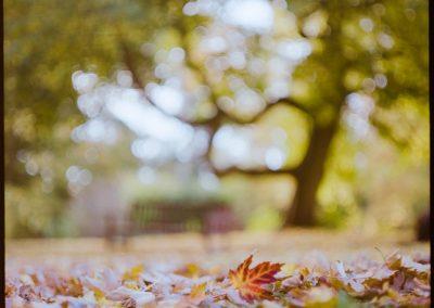 Film photography - Autumn