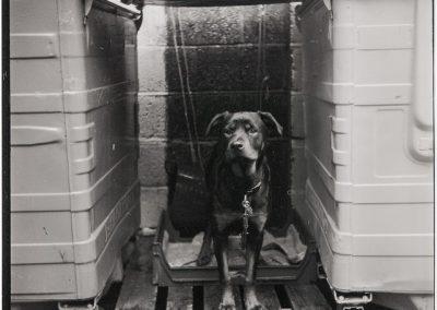 Film photography - Back Yard Dog
